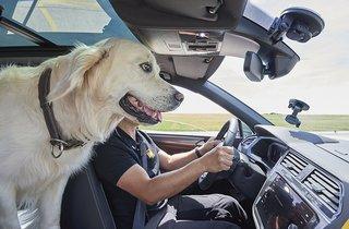 Hund i førersædet